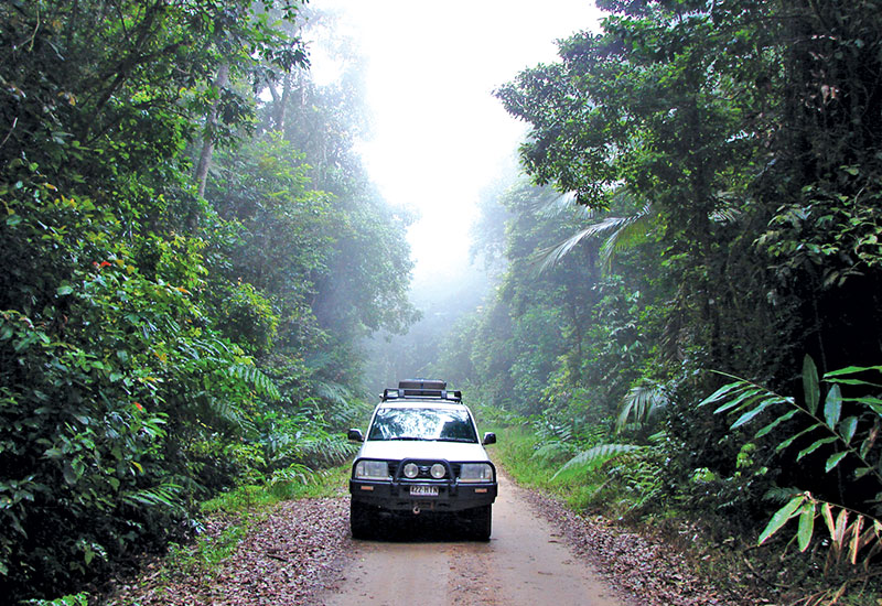 Rainforest 4WD Track