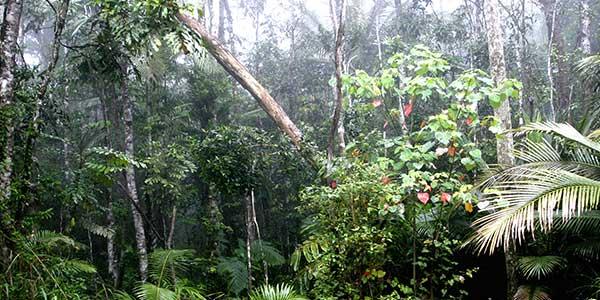 Wet-Tropics-Australia