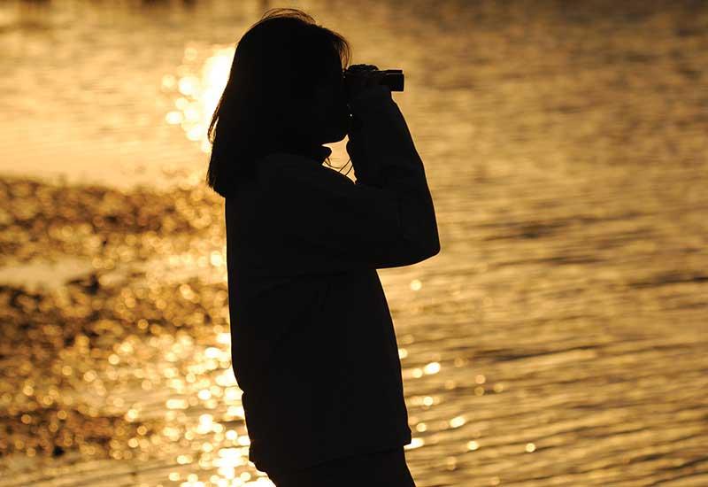 Platypus Spotting at Sunset