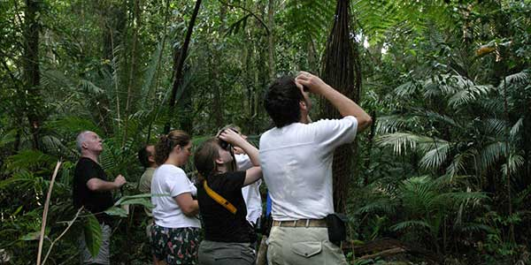 Lumholtz's Tree–kangaroos Spotting
